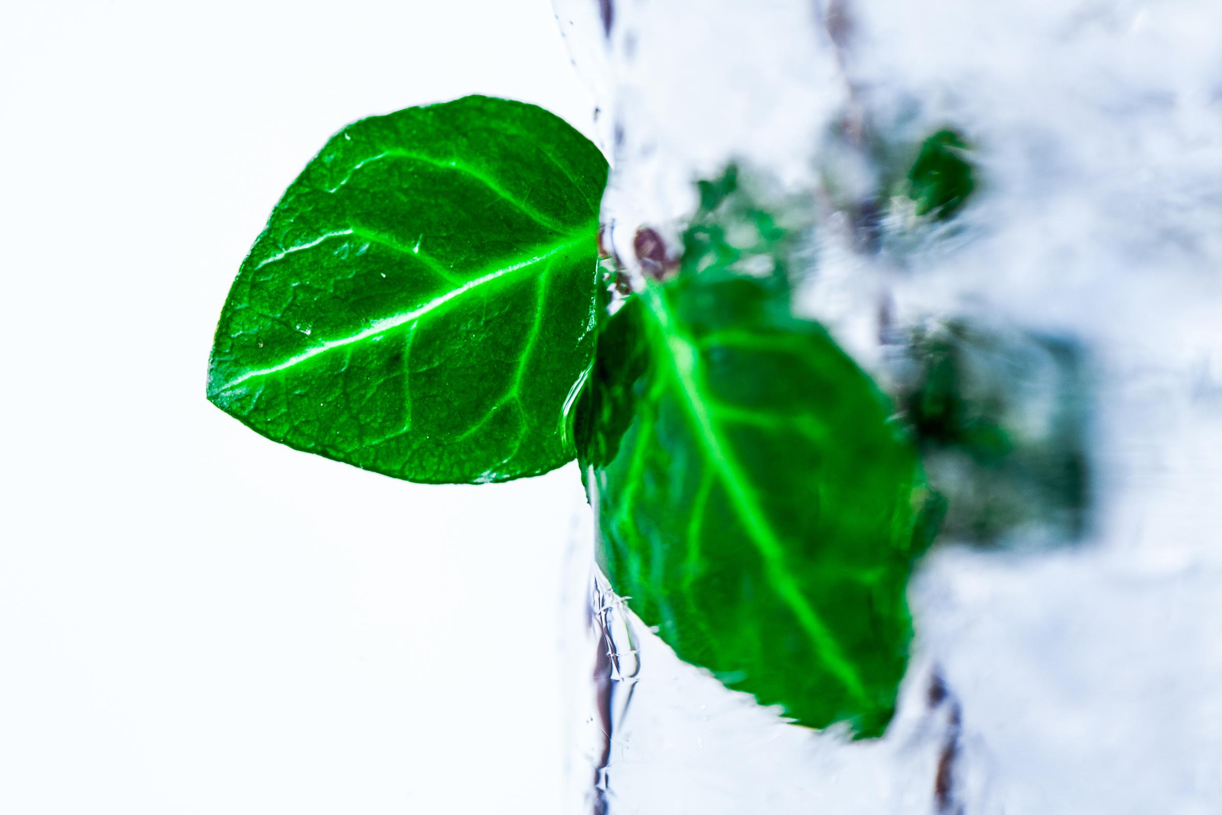 frozen plant.jpg