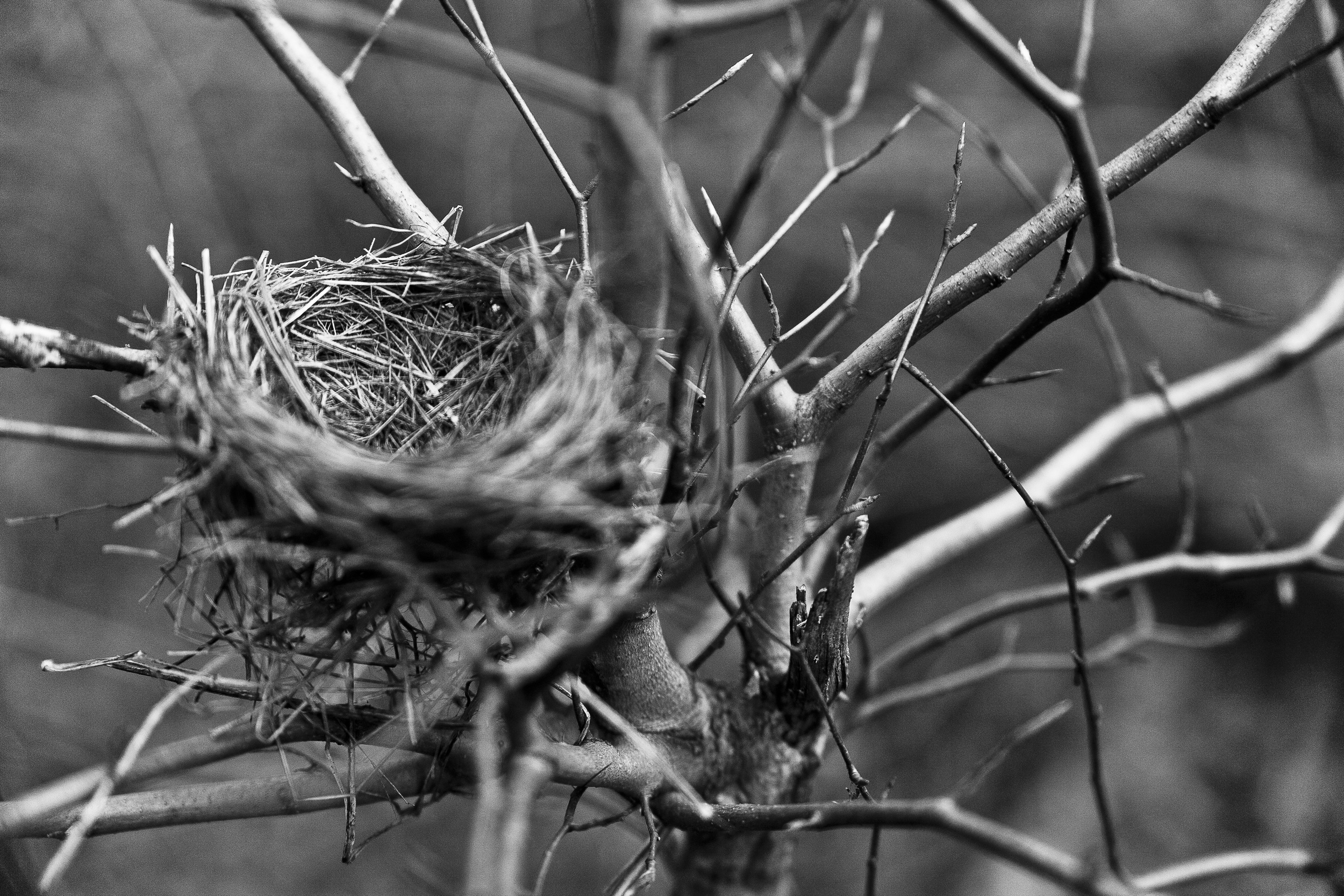 silent spring bird nest.jpg