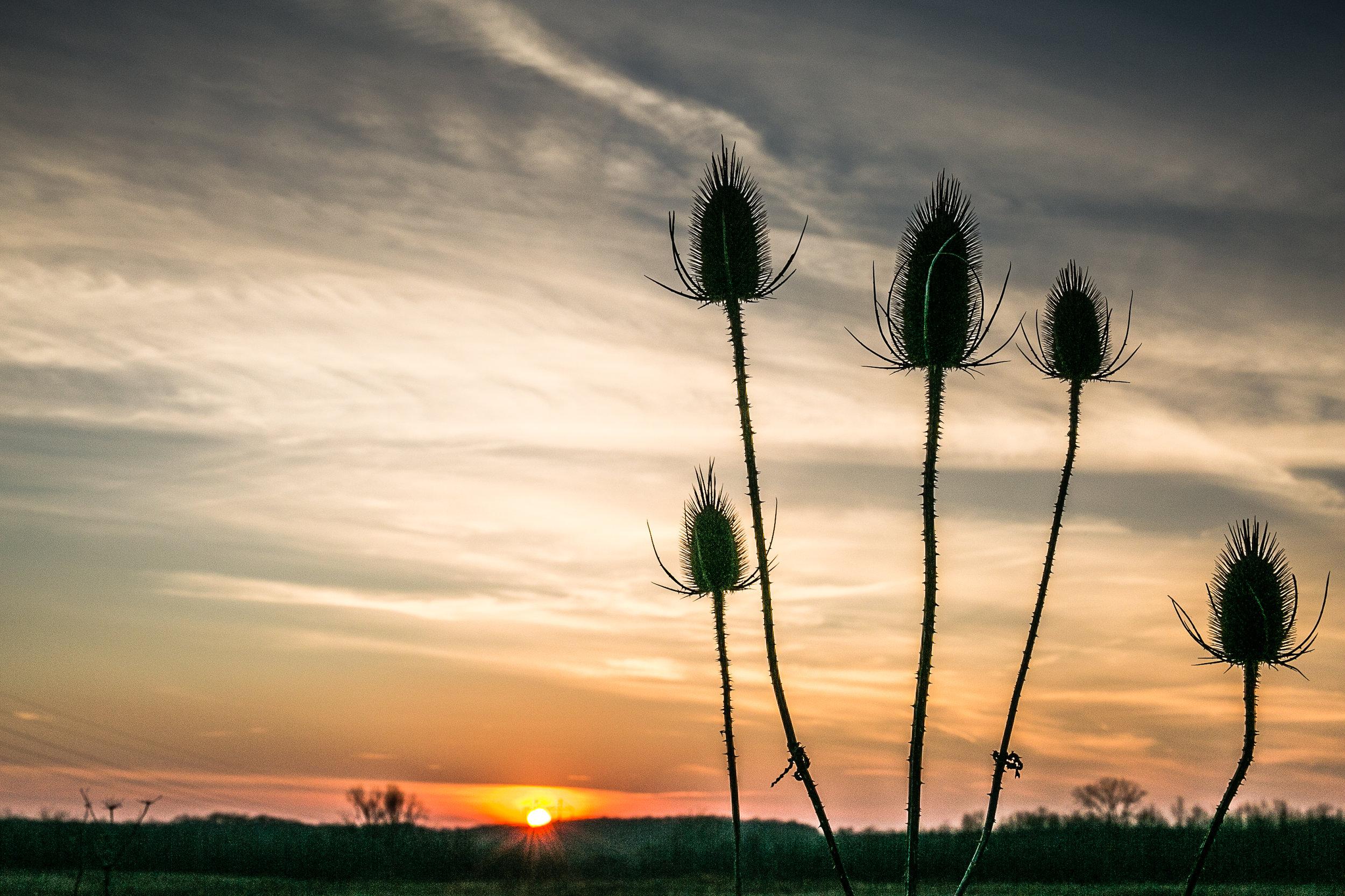sunset over darby.jpg