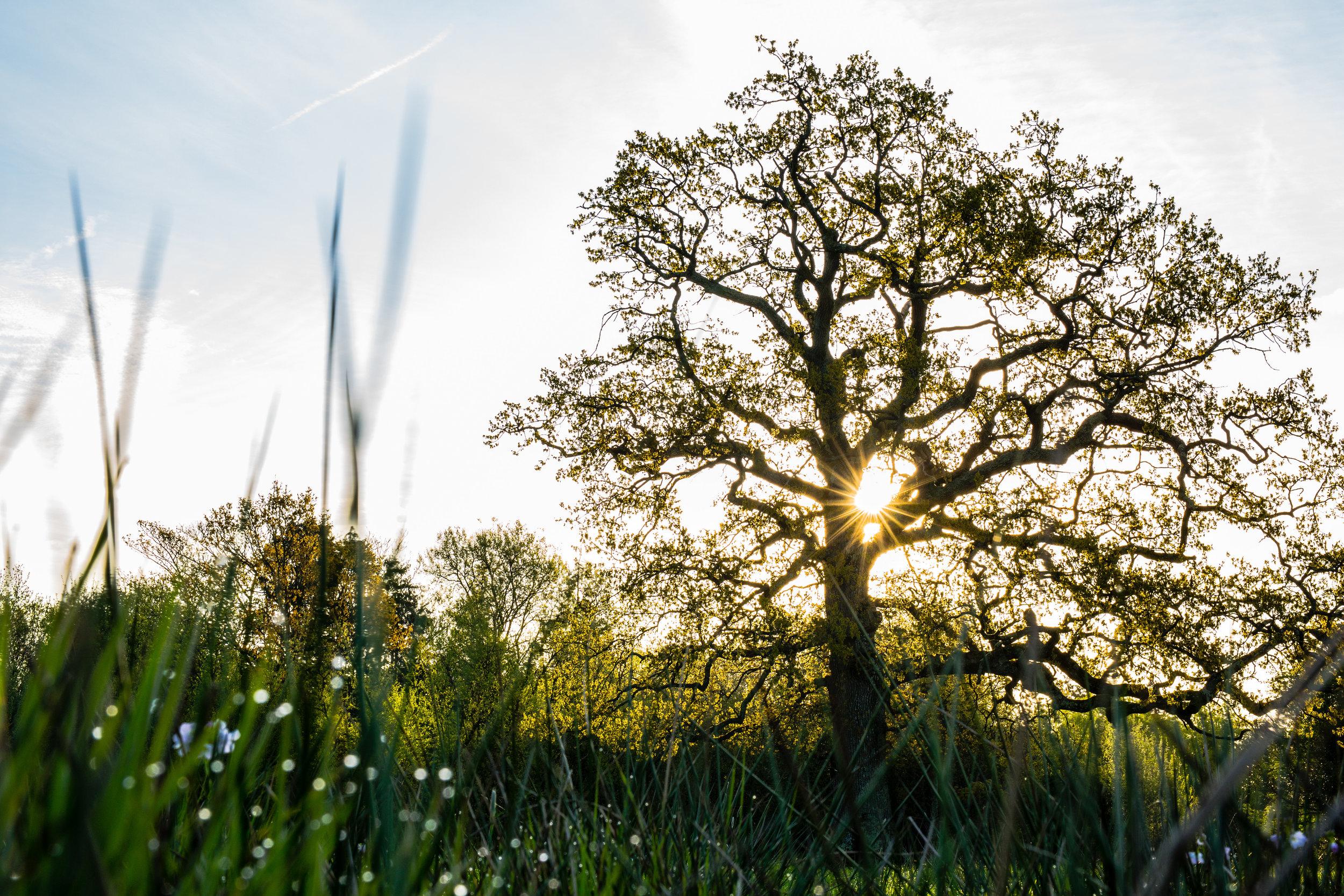 england tree-3.jpg