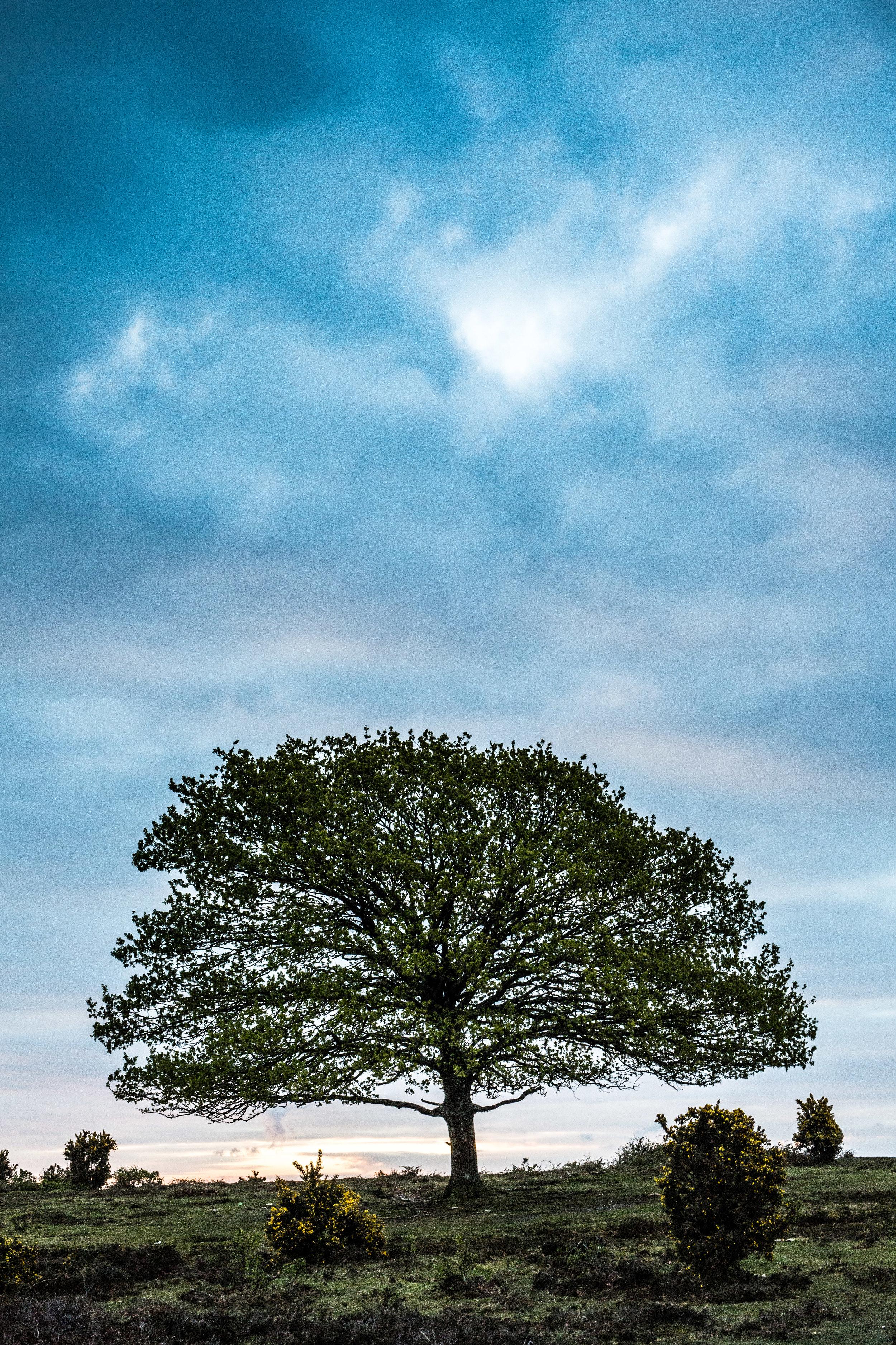 new forest tree-2.jpg