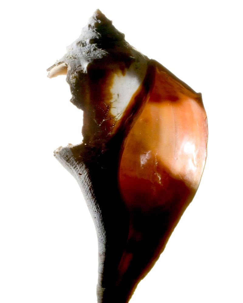 Shell_00036.jpg