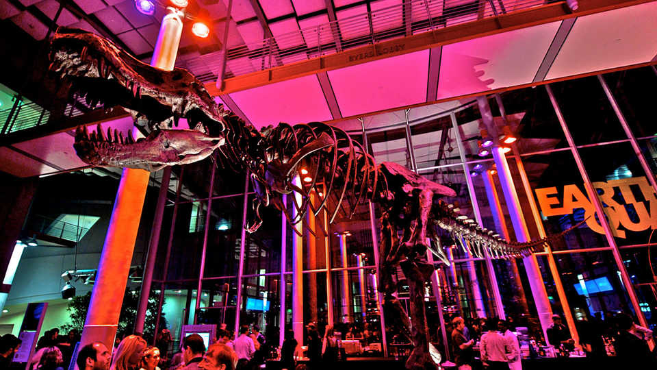 Academy of Science NightLife - Interactive Projects