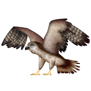Falconer.png