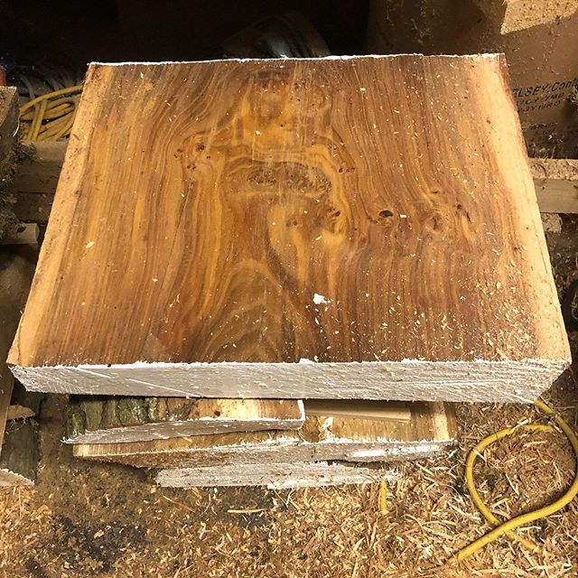And you thought watching paint dry was boring. This elm looks real nice at least.