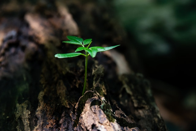 a small sprout growing out of a tree
