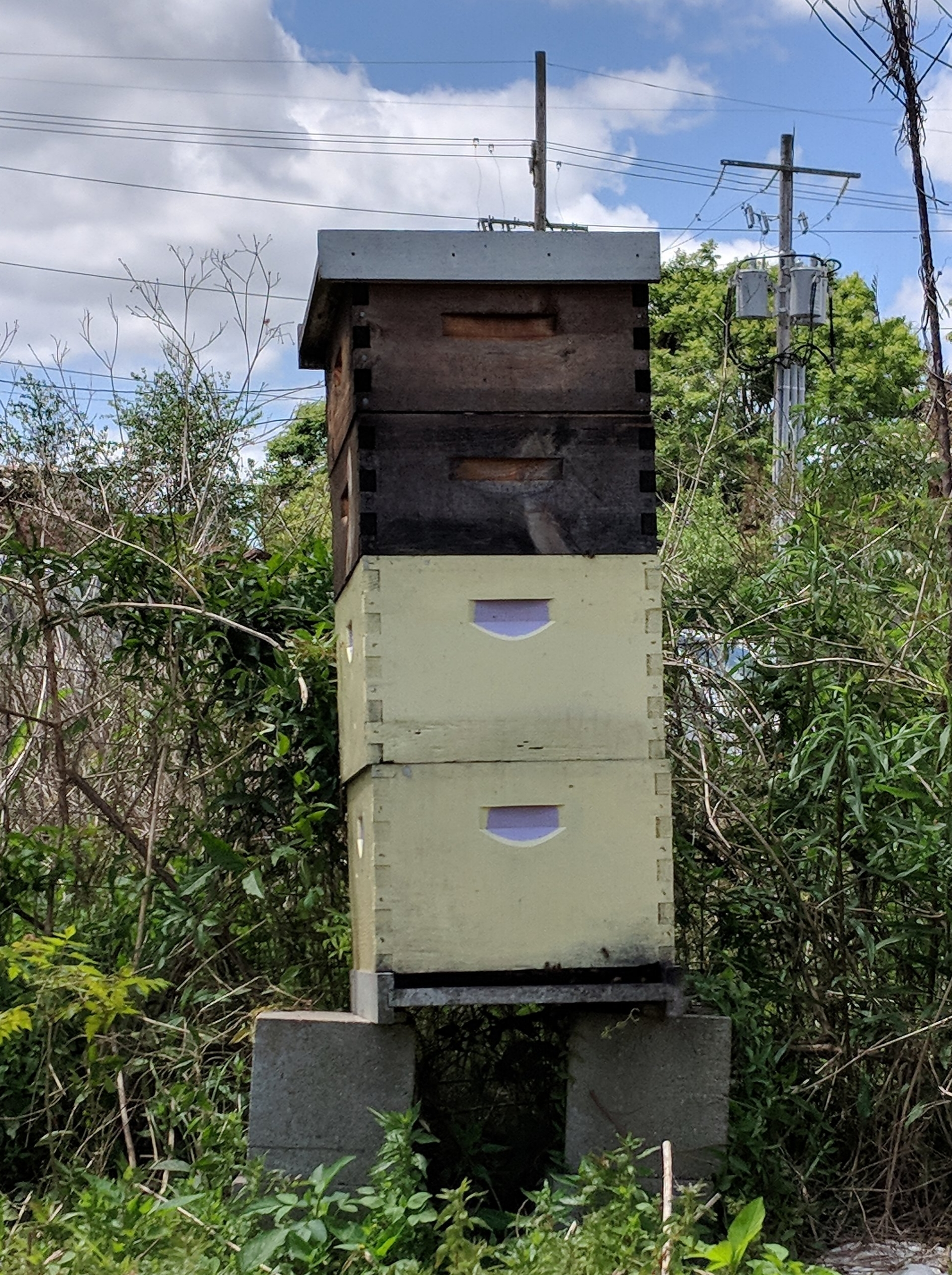 The Culinary Library's Beehive