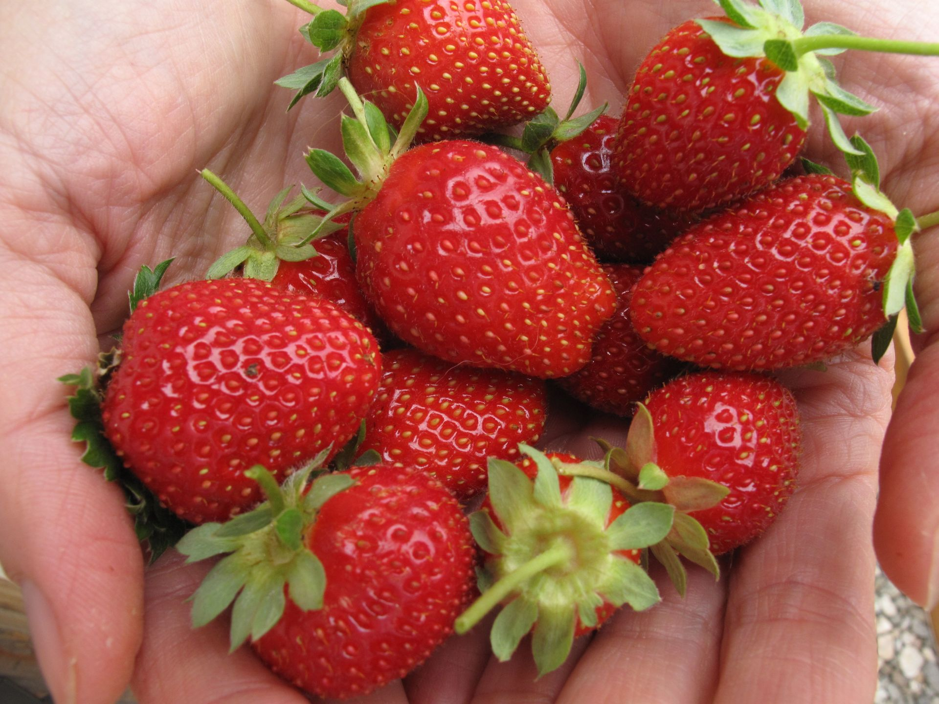 Strawberry JF.jpg