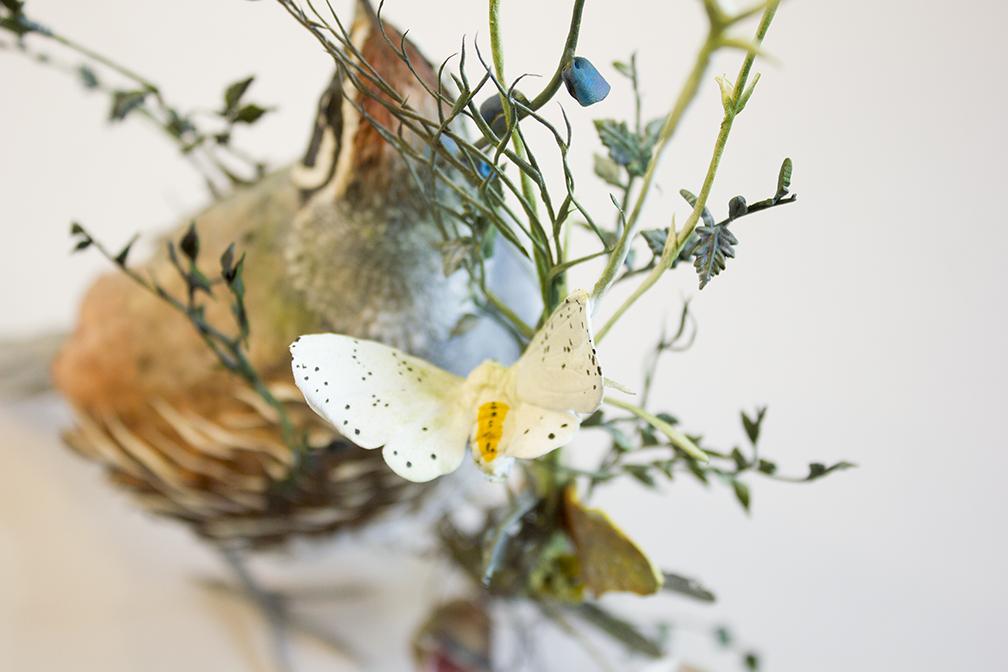 quail3.jpg