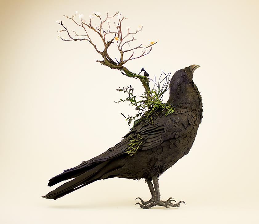 raven..1.jpg