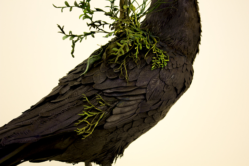 raven..2.jpg