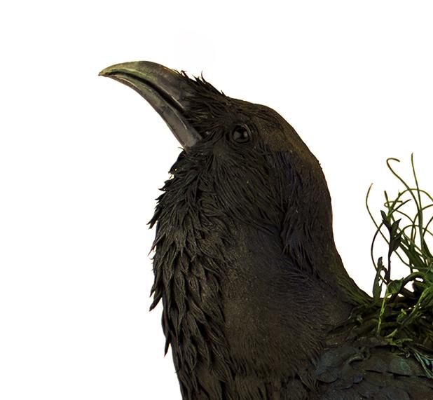 raven7.jpg