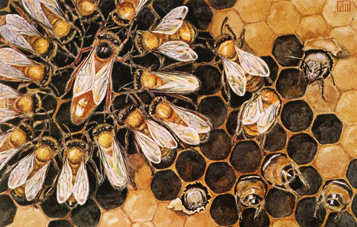 Queen Bee and Workers ~ Source Unknown