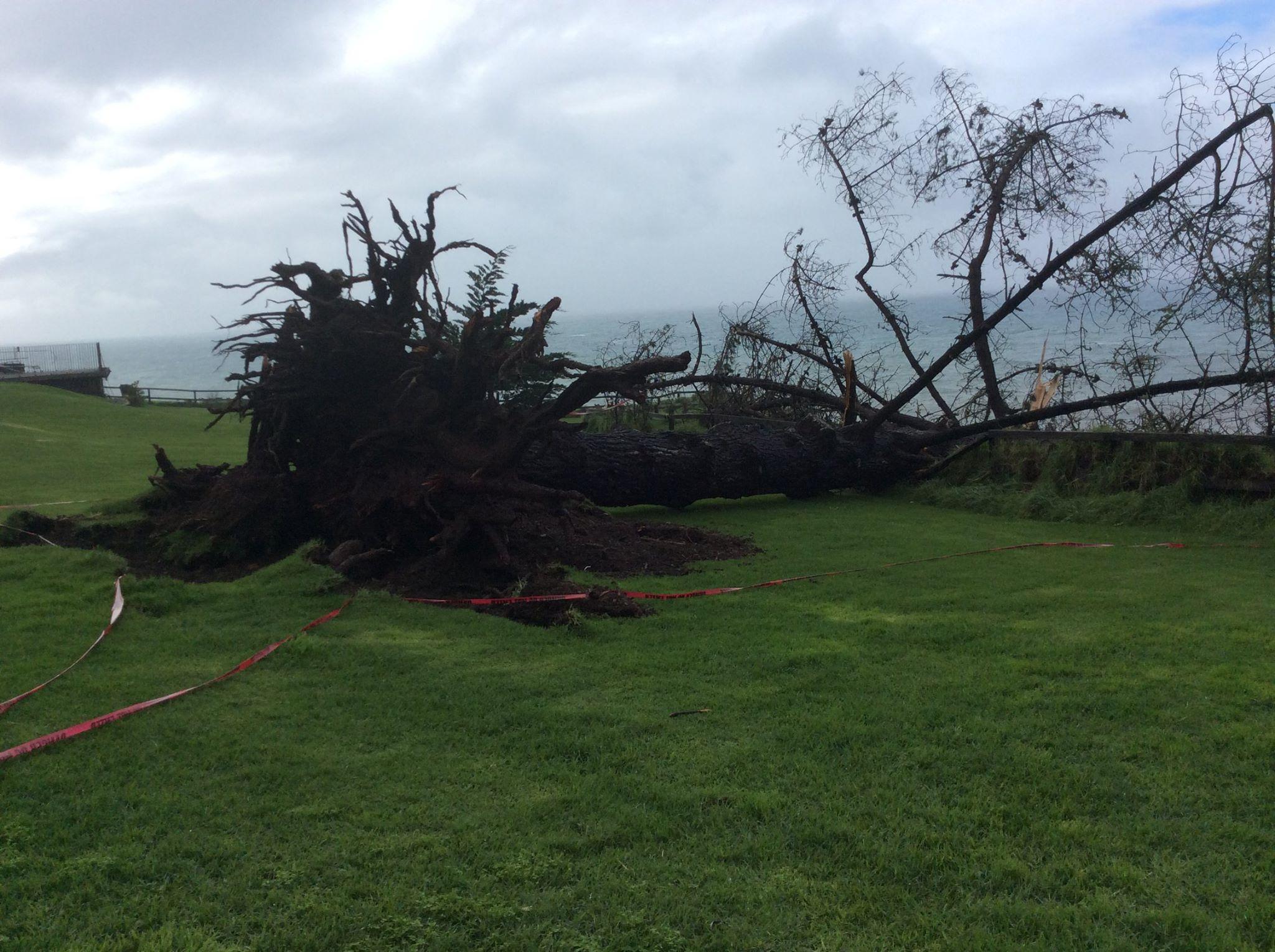 Fallen Nest Tree ~ Esalen Insitute
