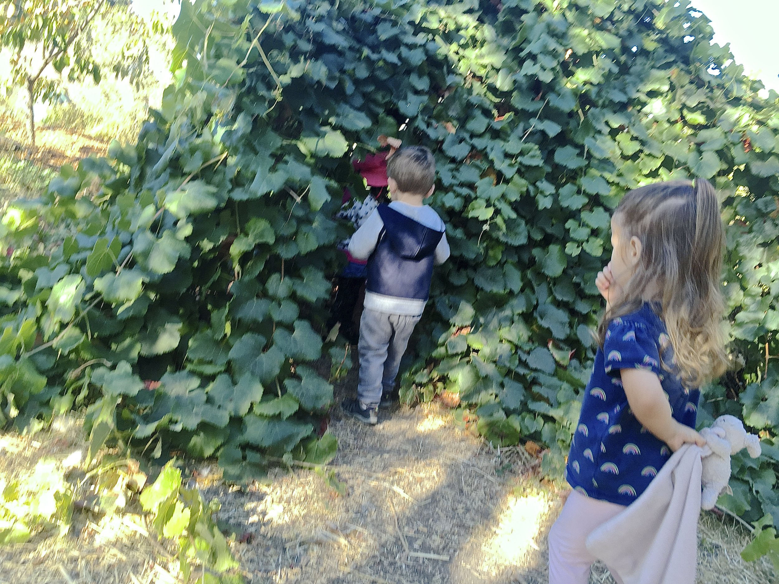 Grape Fort, School Garden ~ JH