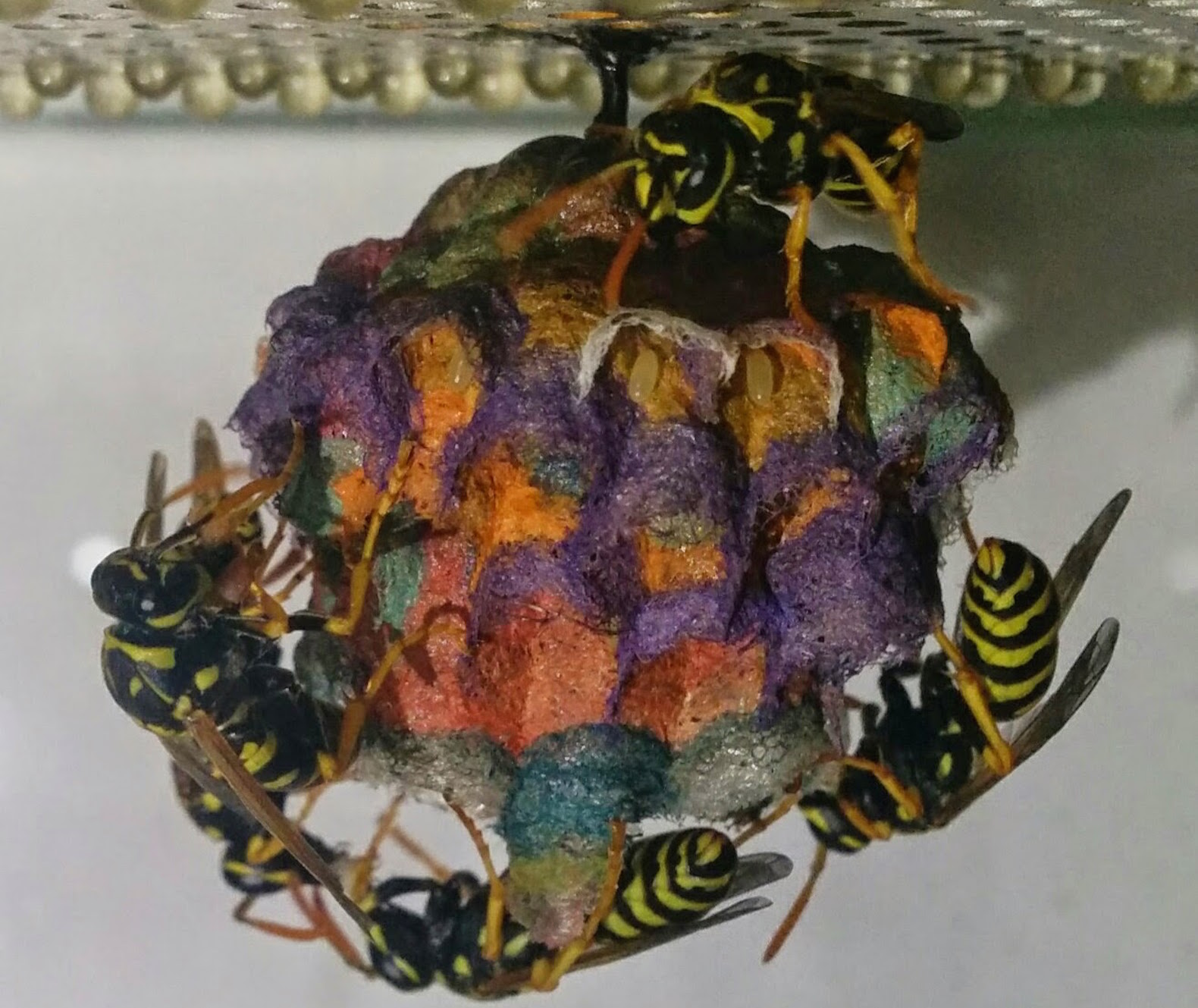 Construction Paper Wasp Nest ~ Mattia Menchetti