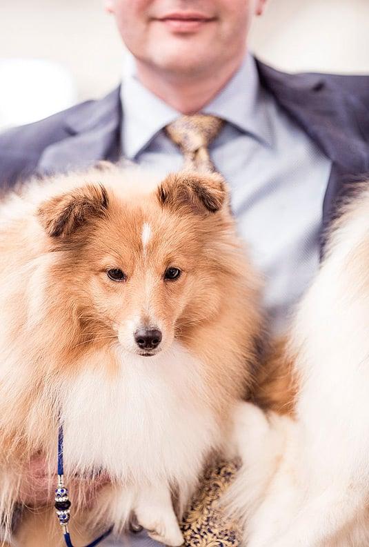 Dog_Show_Portrait_4.jpg