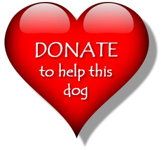 Donate for this dog.JPG