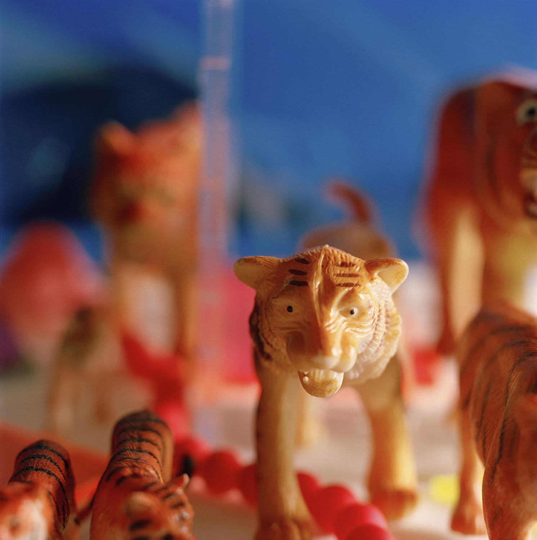 mÜnga-tigrar.jpg