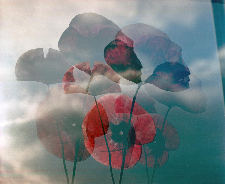 Sky poppies1995.jpg