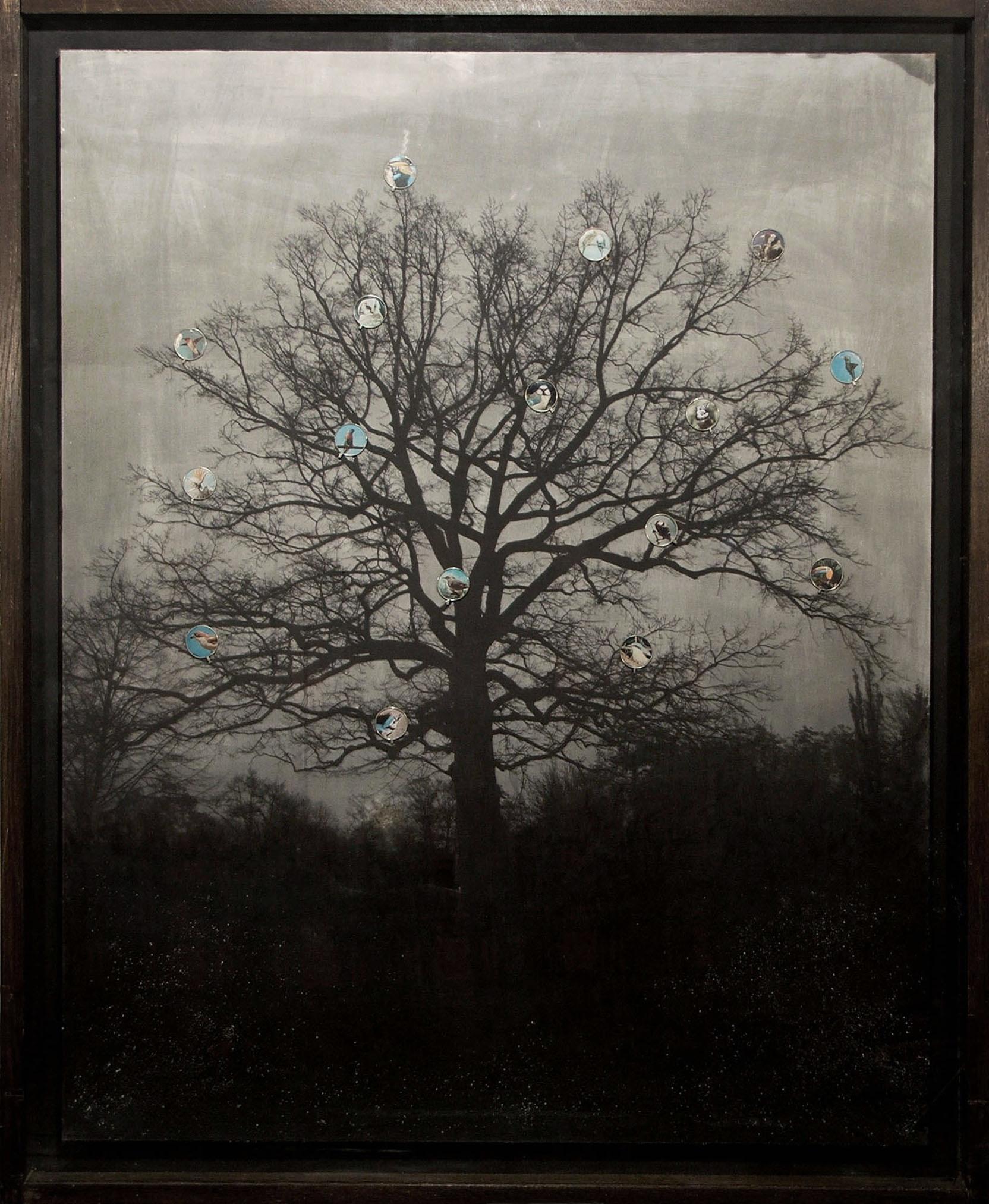 5.The_Tree_110x140cm.jpg