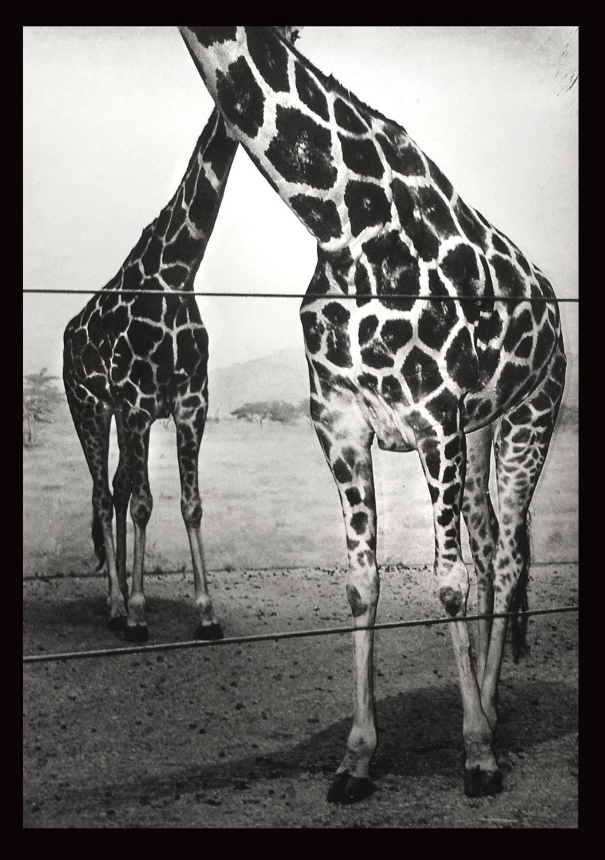 5.Bronx_Zoo_1994_.jpg