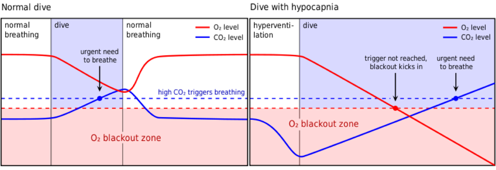 Figure 3: The graph explains why it is so important to avoid hyperventilation before diving, and how it may increase the risk for blackout due to hypoxia. The risk of blackout is increased with hyperventilation before the dive because the urge to breath is delayed due to reduced CO2-levels