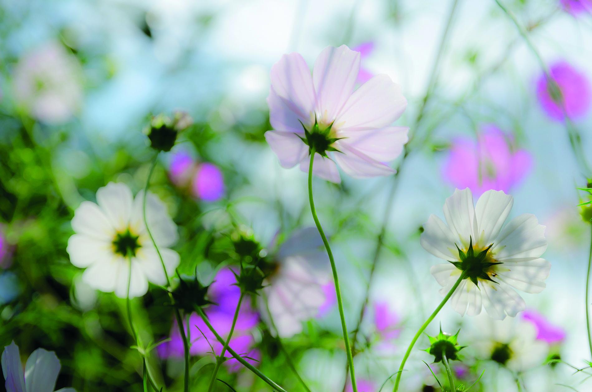 Flowerbed in spring, Sofia, Bulgaria. © JW Amsterdam