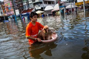 """Rio+20: A Voice From Bangkok, Thailand"",    The Guardian   , 15 June 2012."