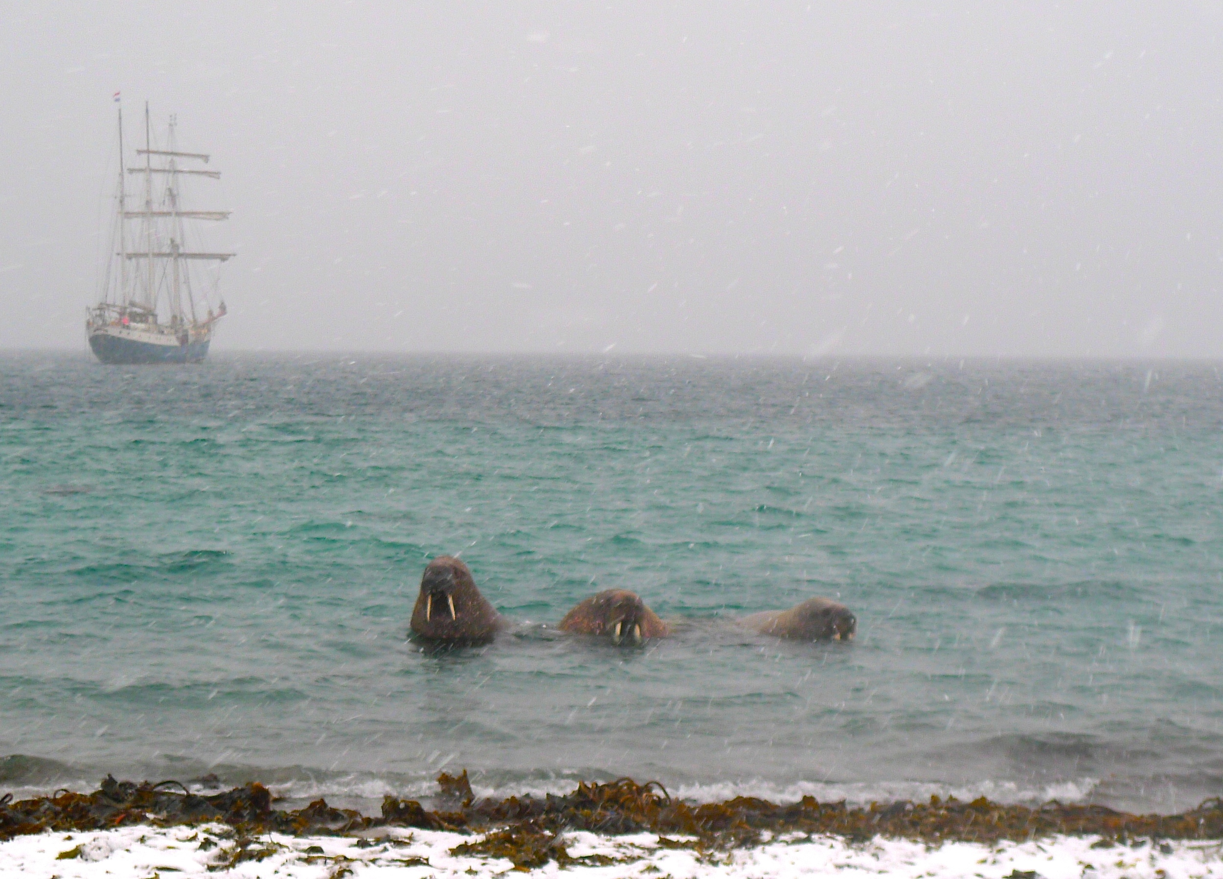 These guys were frolicking alongside the zodiac on our way to shore, as much as something so massive can frolic...