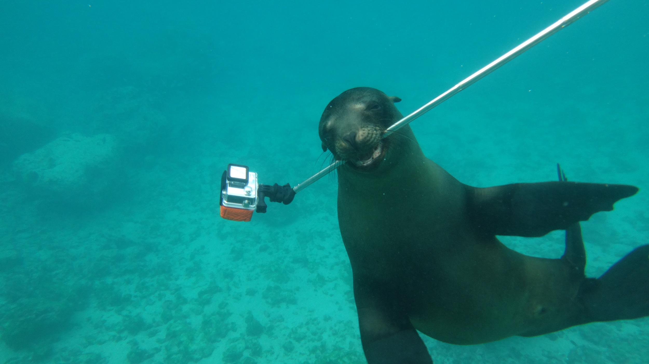 Even sea lions can take selfies.....