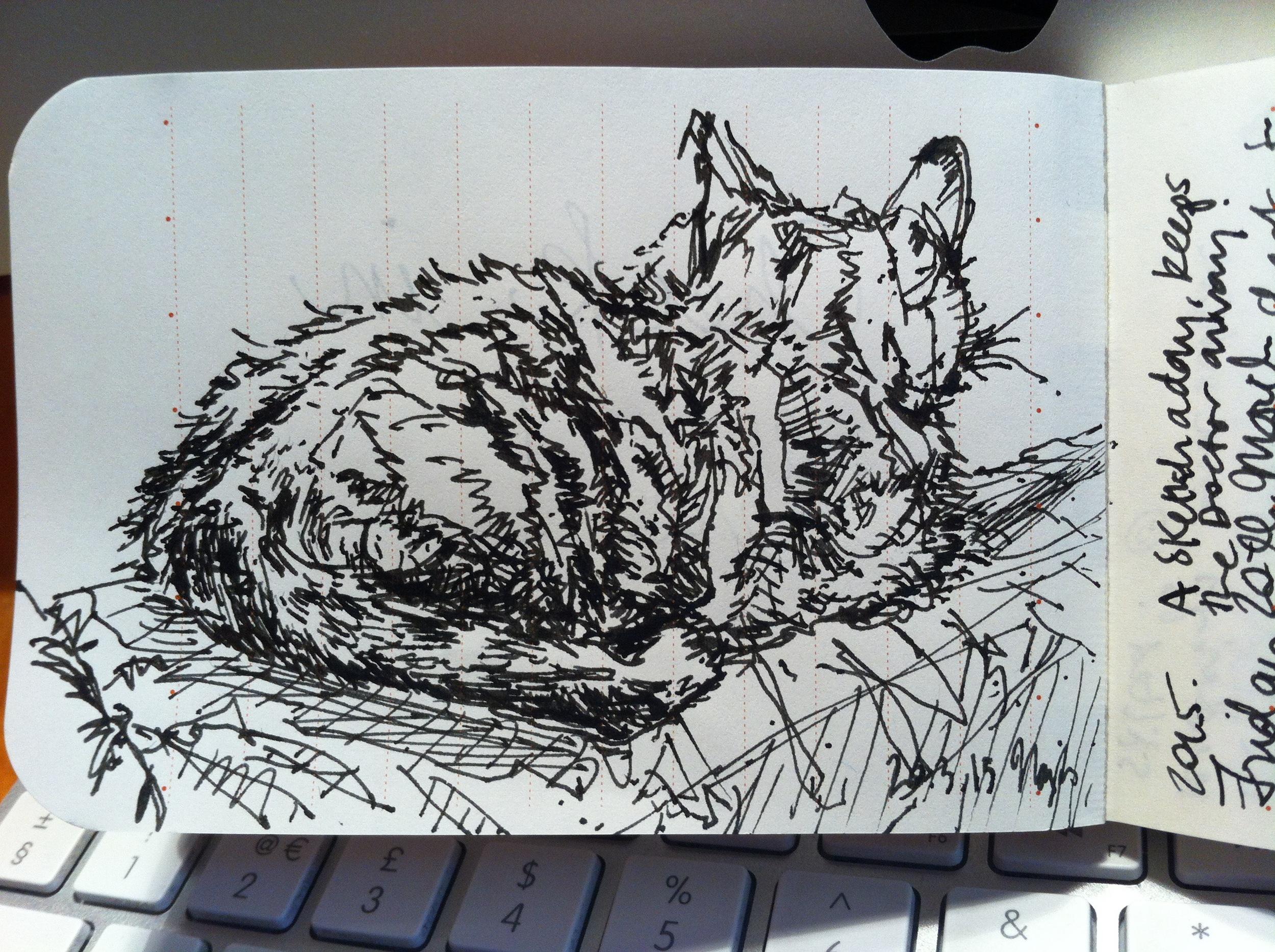 Cat surveying from a sofa ridge.