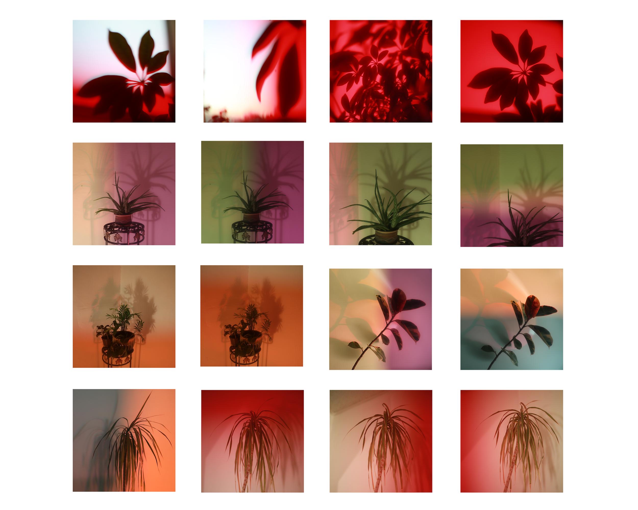 Photosynthesize copy.jpg