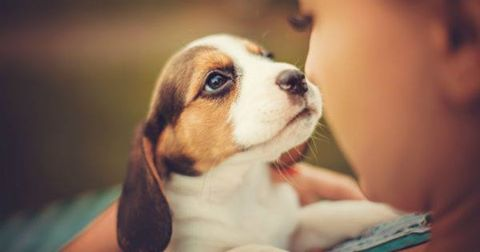 Emotional Support Animals, Therapy and Service Dogs - October 16, 2019 6-7pmNamaste Studios and Forest City Float