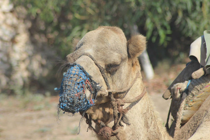 kendra-pilates-retreat-camel