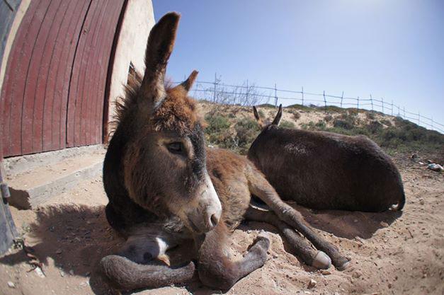 kendra-pilates-morocco-retreat-donkey