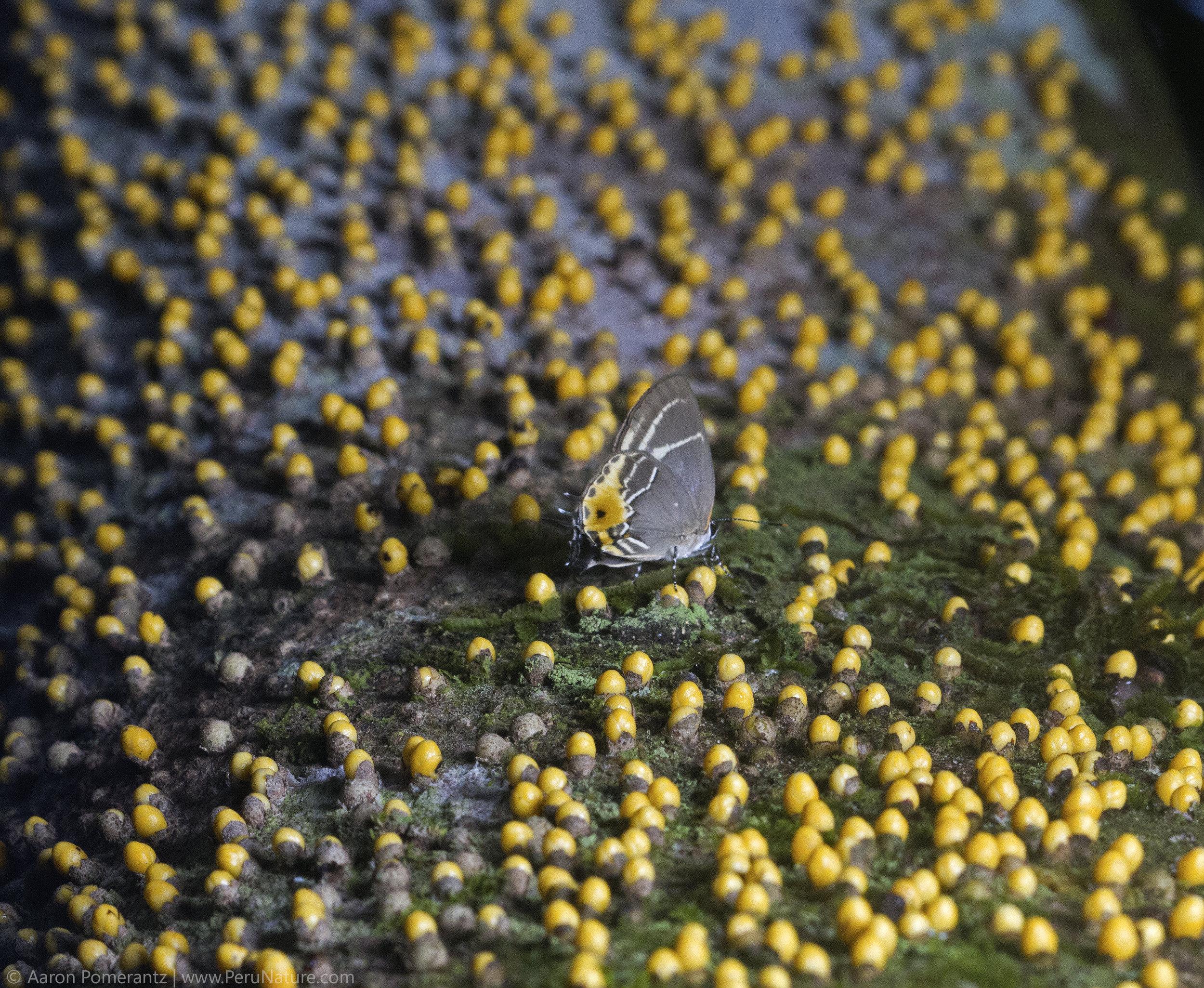 6-Butterfly-on-Tree.jpg