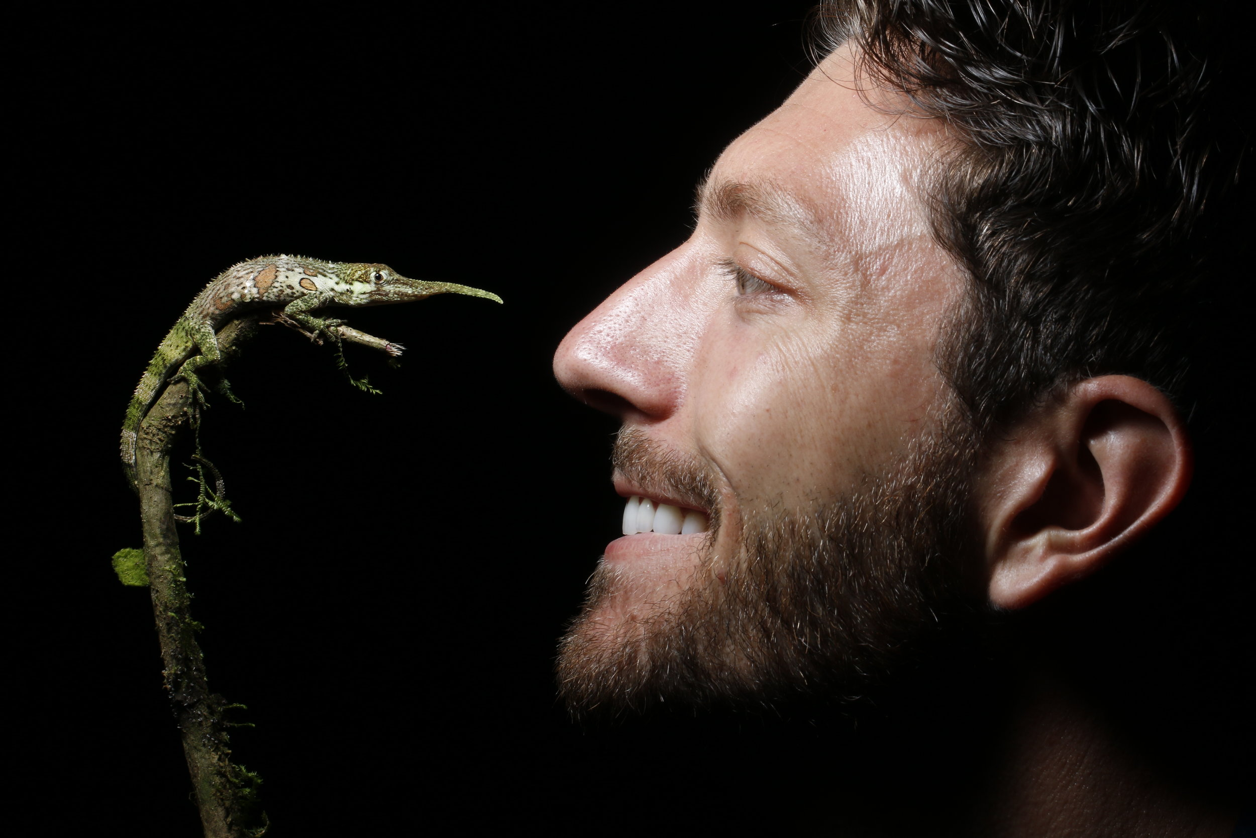 Face to face with the incredible Pinocchio lizard. Such an amazing opportunity to see this rare animal!