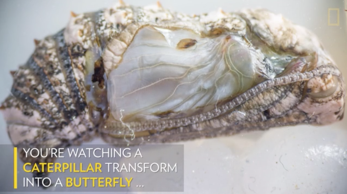 https://news.nationalgeographic.com/2017/06/butterfly-wing-metamorphosis-caterpillar-spd/