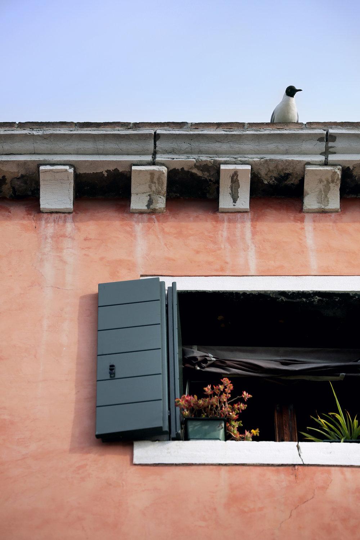 ven - gull on roof.jpeg