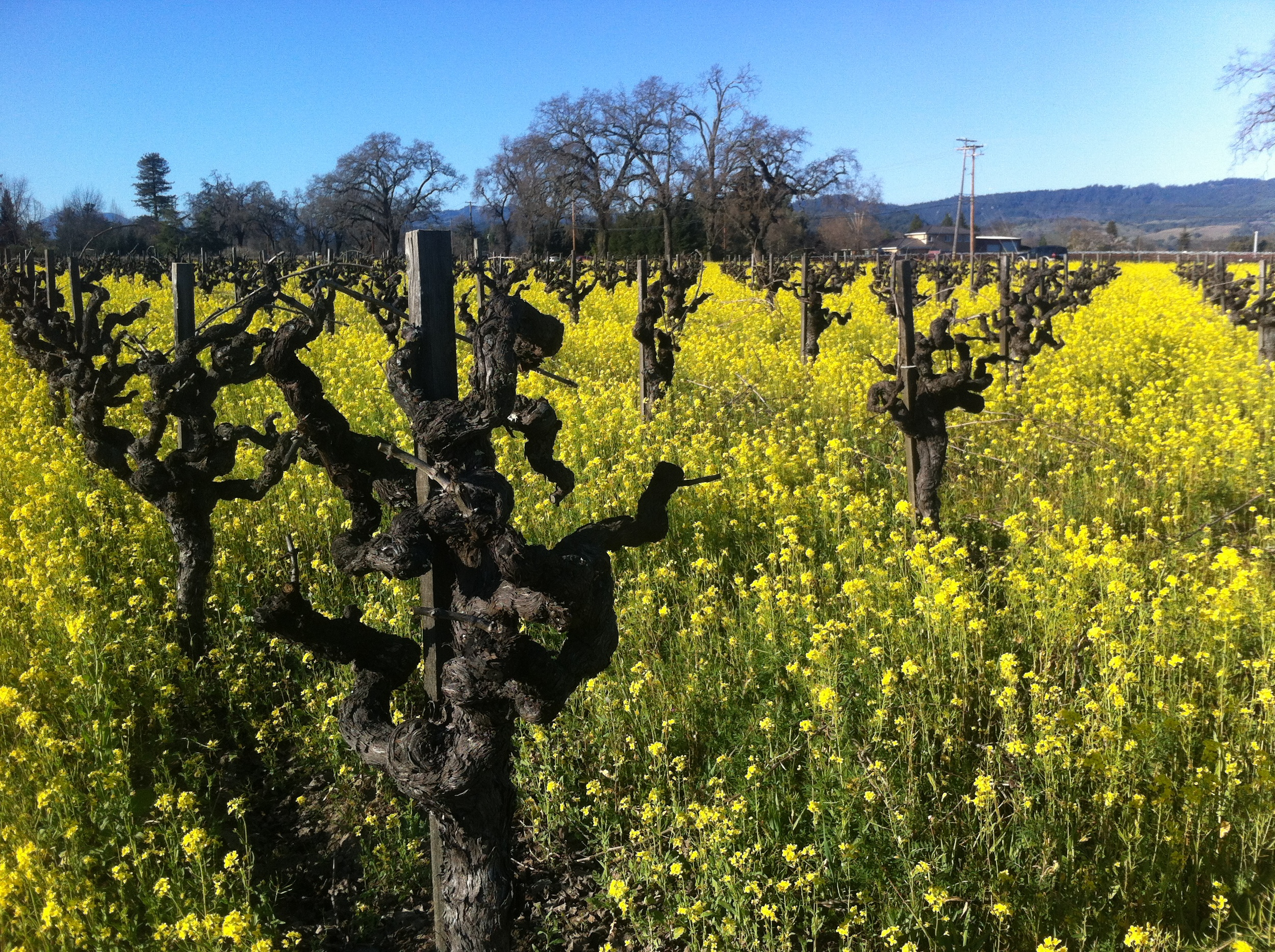 Riesling at Rossi Ranch by Rory of Calder Wine