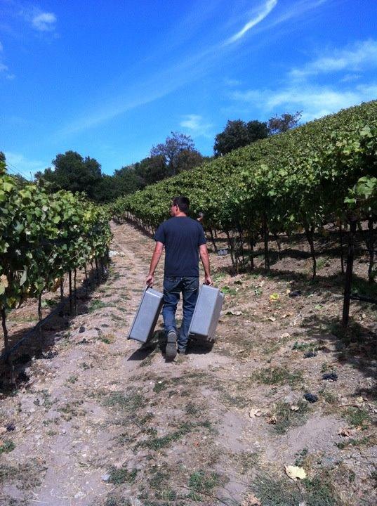 Chris of Broc Cellars for Harvest by Chris Scanlan