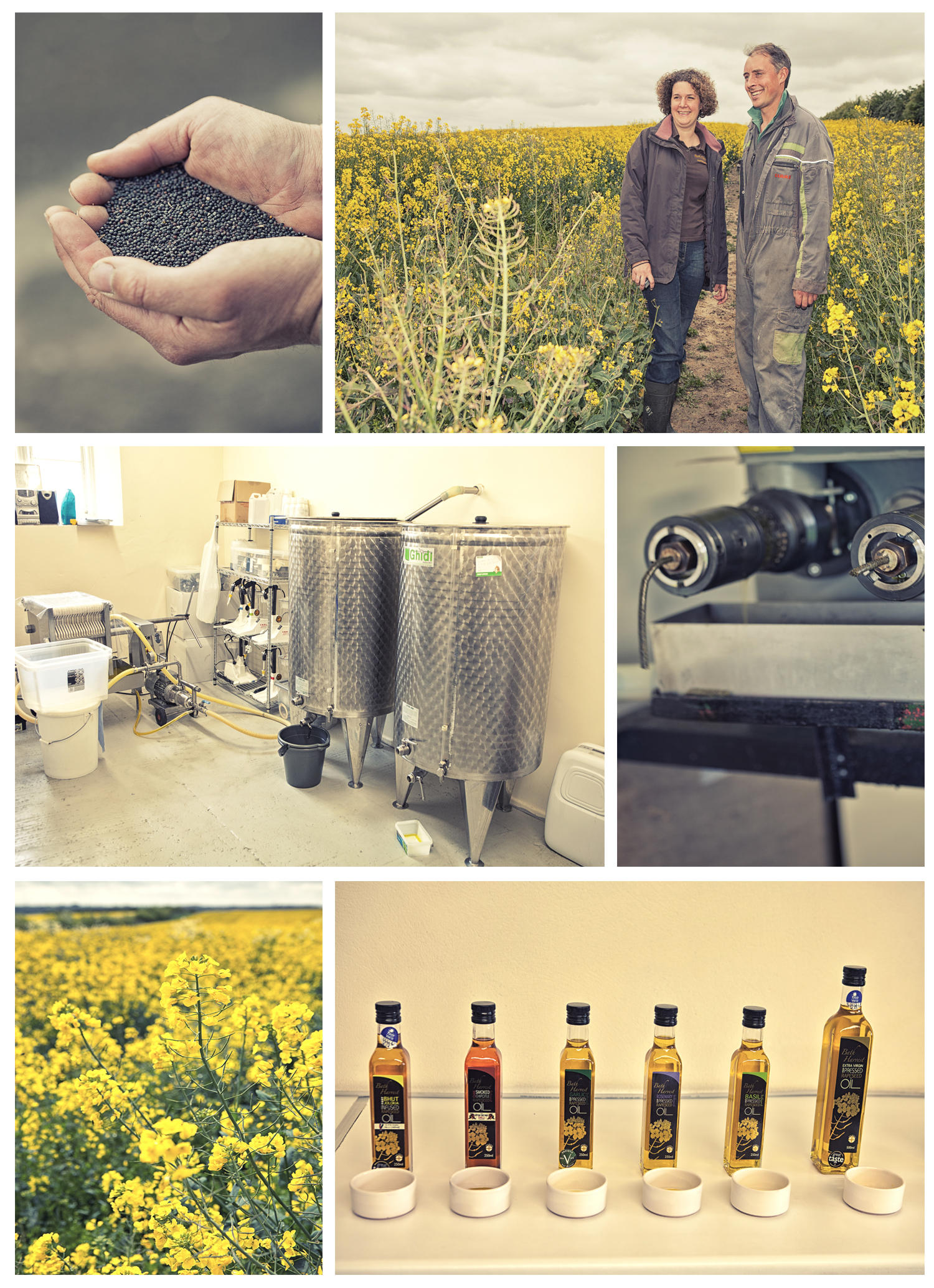 Rapeseed Oil production at Wilmington Farm