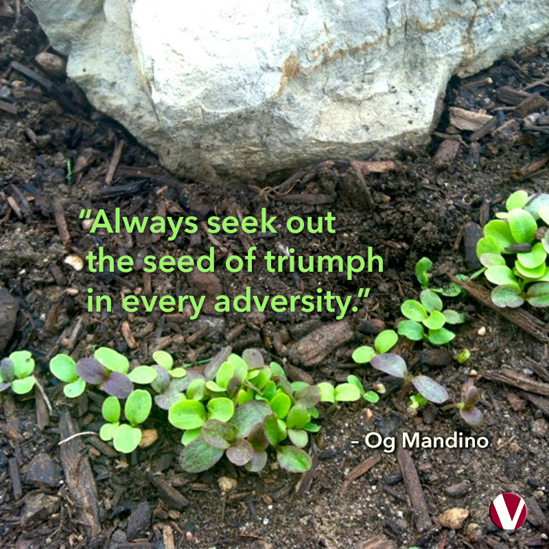always seek out the seeds of triumph