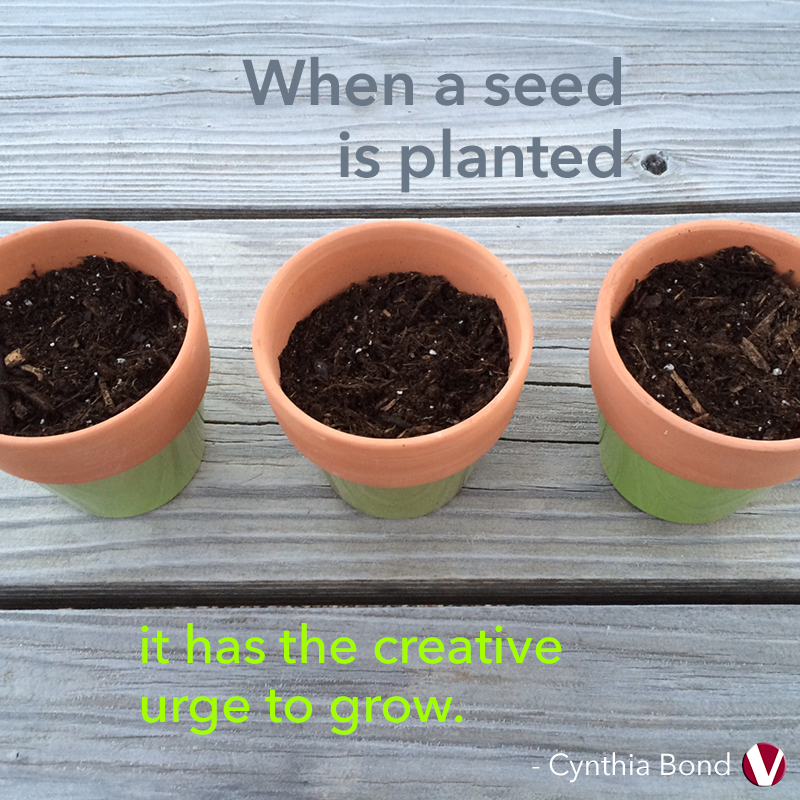 when a seed is planted