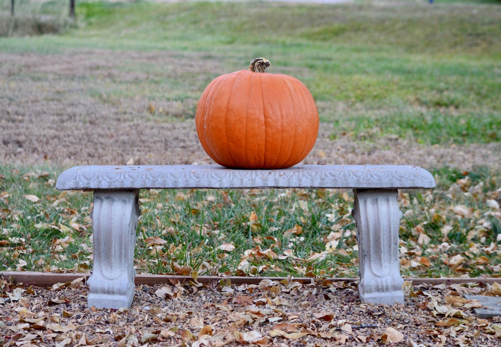 Pumpkin Bench.jpg