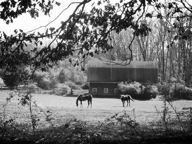 horsesvalley.jpg