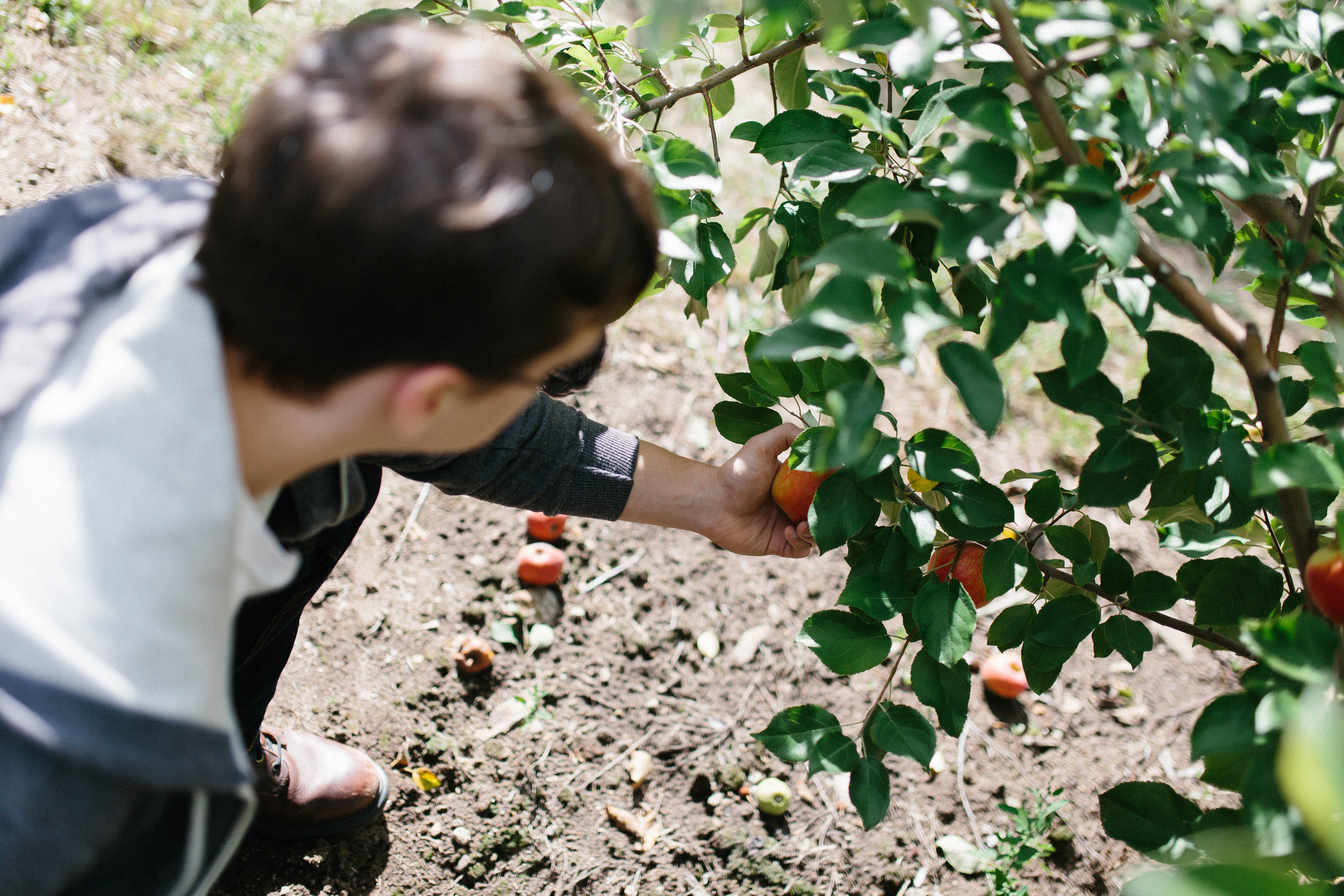 Will Palmer Picking an Apple