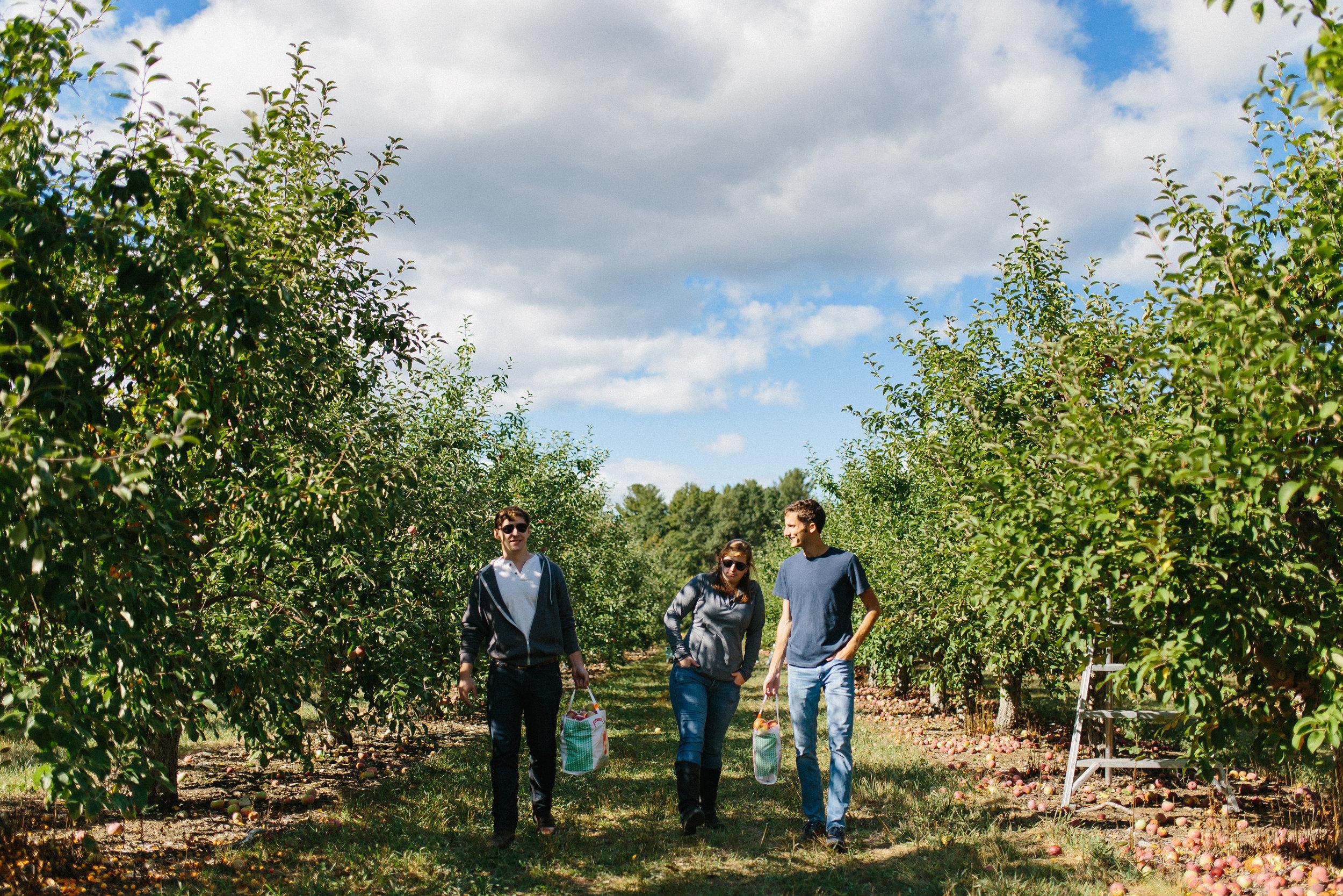 Friends Walking in an Apple Orchard