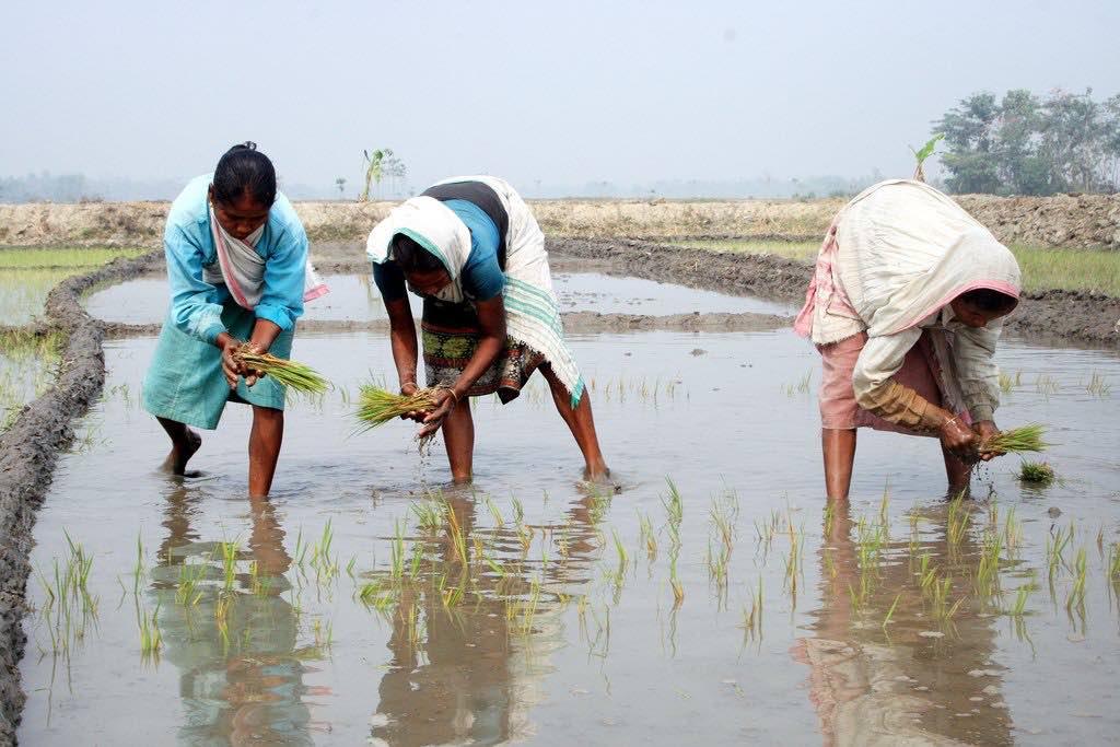 rice paddy women smaller.jpg